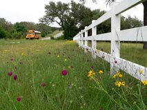 De Bus van de school op Landelijk Road van Texas Royalty-vrije Stock Fotografie
