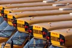 De Bussen van de school Stock Fotografie