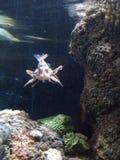 De câble regardant des poissons Image stock