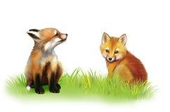 De cabine van de vos. Twee babyvossen die op gras spelen. Royalty-vrije Stock Fotografie
