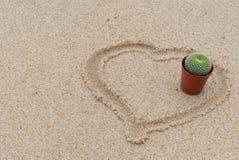 De cactus in bloempot heeft hart op zandachtergrond die wordt gevormd stock afbeeldingen