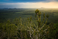De cactus et de Mountain View vue en haut Photos libres de droits