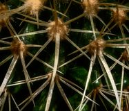 De cactus groeit in een pot royalty-vrije stock afbeeldingen