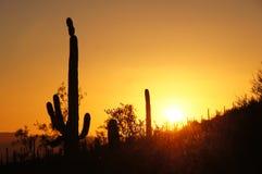 De Cactus Nationaal Monument van de orgaanpijp, Arizona, de V.S. royalty-vrije stock foto