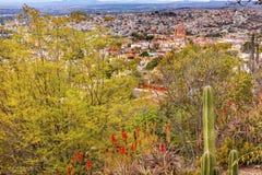 De Cactus Parroquia van San Miguel de Allende Mexico Miramar Overlook Stock Afbeelding