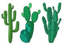 De cactus plant vectorillustratie Stock Afbeeldingen