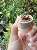 De cactus in pot op hand ziet mooi en de achtergrond is volledig van cactus stock foto