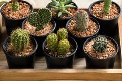 De cactus in pot op houten doos Stock Foto's