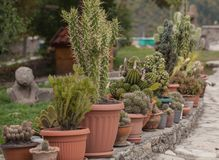 De cactus in potten op de straat kweekt blad, de zomertijd stock foto