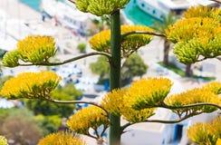 De cactus van de agave Royalty-vrije Stock Fotografie