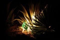 De cactus van de agave royalty-vrije stock foto's