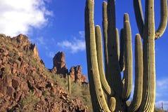 De Cactus van de Bergen van het bijgeloof Stock Afbeeldingen
