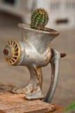 De cactus van de bijl Stock Afbeeldingen