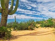 De Cactus van de woestijn Stock Fotografie