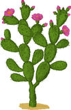 De cactus van Optunia. Vector royalty-vrije illustratie