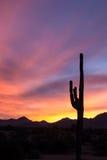De cactus van Saguaro bij zonsondergang Stock Afbeelding