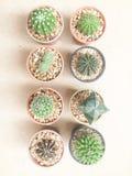 De Cactusinstallaties van de stilleven Natuurlijke Verscheidenheid op Uitstekende Bruine Kleur Royalty-vrije Stock Afbeeldingen
