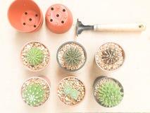 De Cactusinstallaties van de stilleven Natuurlijke Verscheidenheid op Uitstekende Bruine Kleur Royalty-vrije Stock Foto's