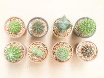 De Cactusinstallaties van de stilleven Natuurlijke Verscheidenheid op Uitstekende Bruine Kleur Royalty-vrije Stock Afbeelding