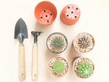 De Cactusinstallaties van de stilleven Natuurlijke Verscheidenheid op Uitstekende Bruine Kleur Stock Afbeeldingen