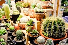 De Cactusinzameling Stock Afbeeldingen