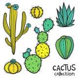 De cactussen overhandigen Getrokken Abstracte Natuurlijke Inzameling Royalty-vrije Stock Fotografie
