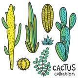 De cactussen overhandigen Getrokken Abstracte Natuurlijke Inzameling Stock Afbeeldingen