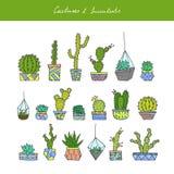 De cactussen, succulents plaatsen Stock Foto's