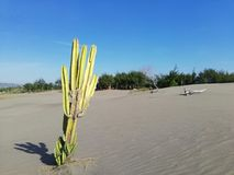 De cactuswoestijn stock fotografie