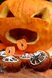 De cake van de chocolademuffin met spinneweb op Halloween-dag Stock Foto's