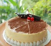 De cake van Tiramisu Stock Fotografie