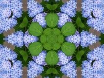 De caleidoscoop van hydrangea hortensia's Stock Foto