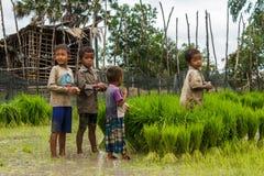 De Cambodjaanse jongens bij een rijst bewerken Stock Foto