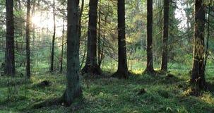 De camera beweegt en verwijdert vegetatie en bomen in het bos tijdens de dag stock video
