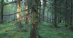 De camera beweegt en verwijdert vegetatie en bomen in het bos tijdens de dag stock videobeelden