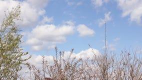 De camera die lage hoek spinnen schoot door weelderig, Vreedzaam Noordwestenbos die lange, oude de groeibomen tonen HD stock videobeelden
