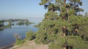 De camera vliegt omhoog langs hoge sparren in bos in zonnige dag, die meer, rivier en kust tonen stock video