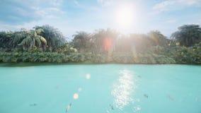 De camera vliegt over een mooi meer met mooie vissen op een tropisch verloren eiland Mooie aard, palmen stock videobeelden