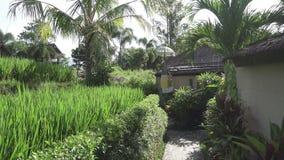 De camerabewegingen langs rijstterrassen en palmen van berg en huis van landbouwers bali indonesië stock footage