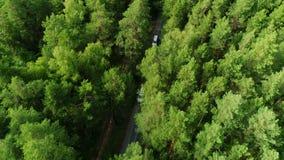 De camerastijgingen boven bos volgt verkeer langs weg opvlammende bomen stock videobeelden