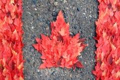 De Canadese Vlag van het esdoornblad Stock Foto