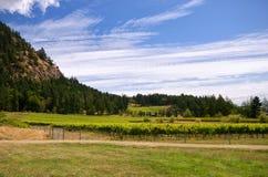De Canadese wijngaard van de het westenkust Stock Foto's