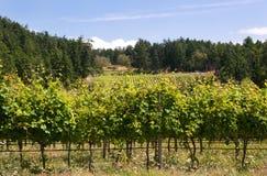 De Canadese wijngaard van de het westenkust Royalty-vrije Stock Foto