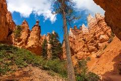 De Canion van Bryce stock foto