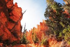 De canion van Bryce Stock Afbeeldingen