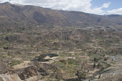 De canion van Colca Stock Afbeeldingen