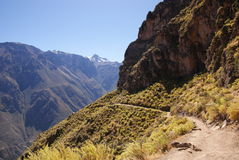 De canion van Colca, Peru Royalty-vrije Stock Fotografie