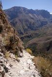 De canion van Colca, Peru Stock Afbeeldingen