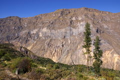 De canion van Colca, Peru Stock Afbeelding
