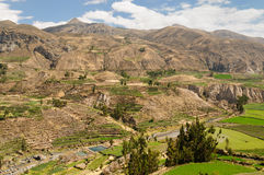 De canion van Colca, Peru Royalty-vrije Stock Afbeeldingen